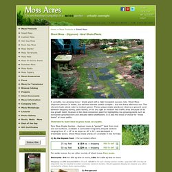 Shade Plants - Moss Acres Fern Moss and Other Shade Plants