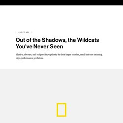 Out of the Shadows, the Wildcats You've Never Seen