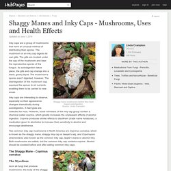 Shaggy Manes and Inky Caps - Mushrooms, Uses and Health Effects