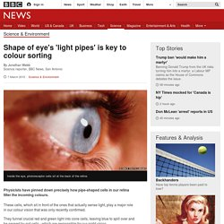 Shape of eye's 'light pipes' is key to colour sorting