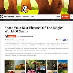 The Magical World Of Snails