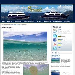Shark Mecca -