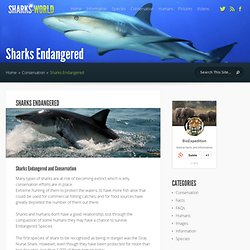 Sharks Endangered - Shark Facts and Information
