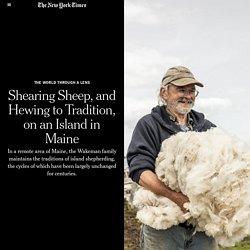 Sheep shearing on island - Maine click 2x