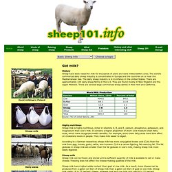 Sheep 101: Dairy sheep