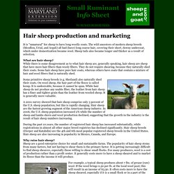 Hair sheep production and marketing