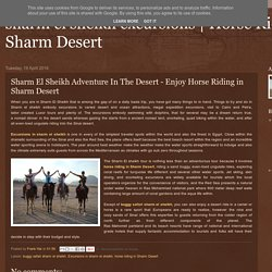 Horse Riding in Sharm Desert: Sharm El Sheikh Adventure In The Desert - Enjoy Horse Riding in Sharm Desert