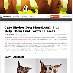 Cute Shelter Dog Photobooth Pics Help Them Find Forever Homes