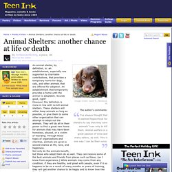 Animal Shelters: another chance at life or death