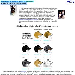Sheltie coat color genetics [Athro, Limited]