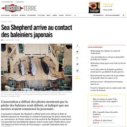 Sea Shepherd arrive au contact des baleiniers japonais
