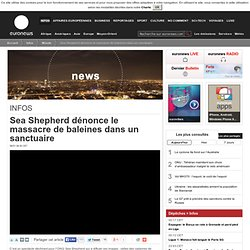 Sea Shepherd dénonce le massacre de baleines dans un sanctuaire
