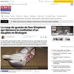 Le coup de gueule de Sea Shepherd qui dénonce la mutilation d'un dauphin en Bretagne