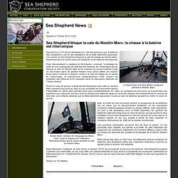 Sea Shepherd bloque la cale du Nisshin Maru: la chasse à la baleine est interrompue