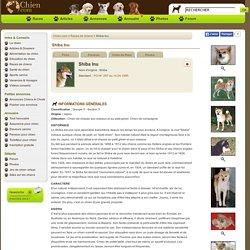 Shiba Inu : tout sur cette race de chien