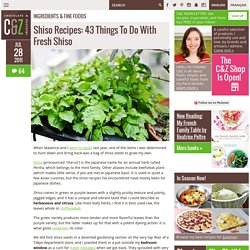 43 Things To Do With Fresh Shiso