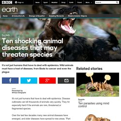 Earth - Ten shocking animal diseases that may threaten species