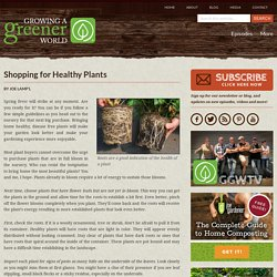 Shopping for Healthy Plants - Growing A Greener World®