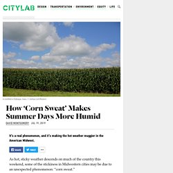 7/19/19: Short Primer on 'Corn Sweat' & Summer Humidity