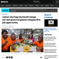 Labour shortage during NT mango harvest gives Congolese refugees first job opportunity