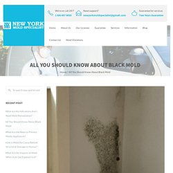 All You Should Know About Black Mold - New York Mold Specialist