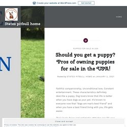 Should you get a puppy? Pros of owning puppies for sale in the USA! – States pitbull home