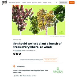 So should we just plant a bunch of trees everywhere, or what?