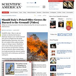 SCIENTIFIC AMERICAN 24/06/15 Should Italy's Prized Olive Groves Be Burned to the Ground? [Video]