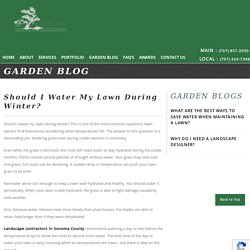Should I Water My Lawn During Winter?