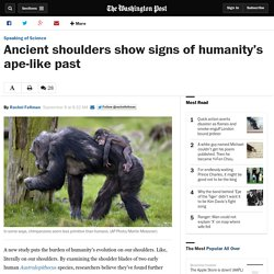 Ancient shoulders show signs of humanity's ape-like past