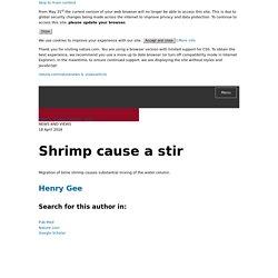 Shrimp cause a stir
