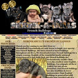 Shrinkabull French Bulldog breeders, French Bulldog puppies for sale, blue French bulldogs