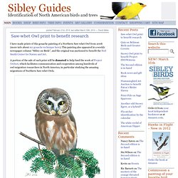 David Sibley's Website