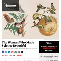 Maria Sibylla Merian, The Woman Who Made Science Beautiful