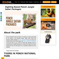 Sighting Based Pench Jungle Safari Packages