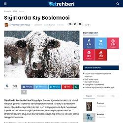 Sığırlarda Kış Beslemesi - Sığırlar - VetRehberi