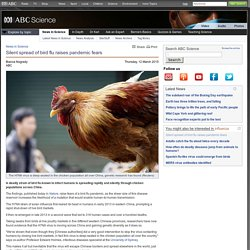 Silent spread of bird flu raises pandemic fears › News in Science (ABC Science)