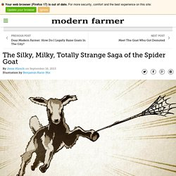 The Silky, Milky, Totally Strange Saga of the Spider Goat