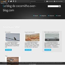sillon - Le blog de cocornitho.over-blog.com