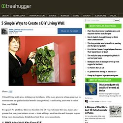 5 Simple Ways to Create a DIY Living Wall