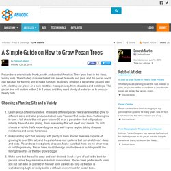 A Simple Guide On How To Grow Pecan Trees