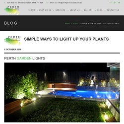 Simple Ways To Light Up Your Plants