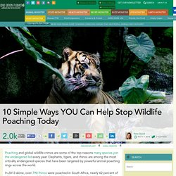 10 Simple Ways YOU Can Help Stop Wildlife Poaching Today
