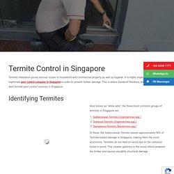 Best Termite Control Singapore
