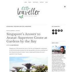 Singapore's Answer to Avatar: Supertree Grove at Gardens by the Bay