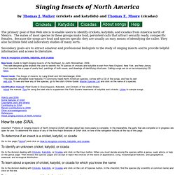 Singing Insects of North America