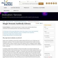 Single Domain Antibody Library