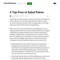 4 Top Pros of Sabal Palms
