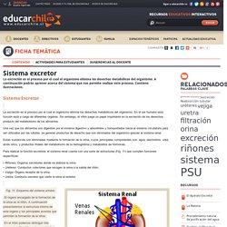 Josepinto2 added: Sistema excretor