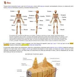 Sistema óseo. Introducción a las Ciencias de la Salud